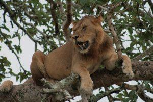 Wildlife Kubwa Big Five Safaris Travels trips Destinations
