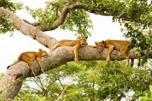 tourism nature Kubwa Travels Visit Vacation