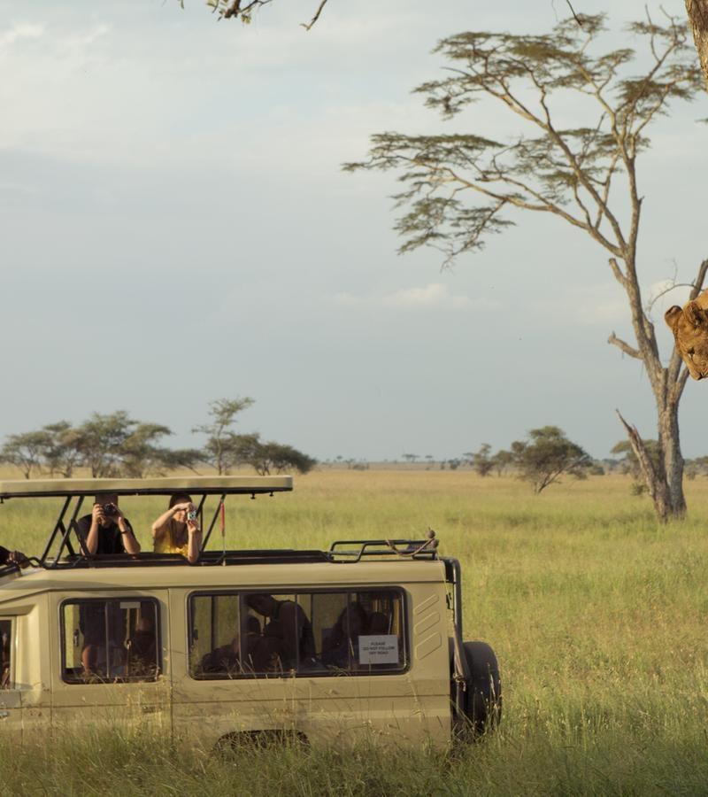 Africa Safaris Tour Big Five Travel Holiday Adventure Wildlife Nature Honeymoon tour company Vacation trip tourism nature Kubwa