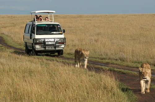 Africa Safaris Tour Big Five Travel Holiday Adventure Wildlife Nature Honeymoon tour company Vacation trip tourism nature Kubwa