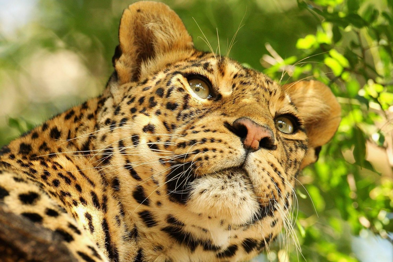 Visit tours Travels Trips Destinations Africa Safaris