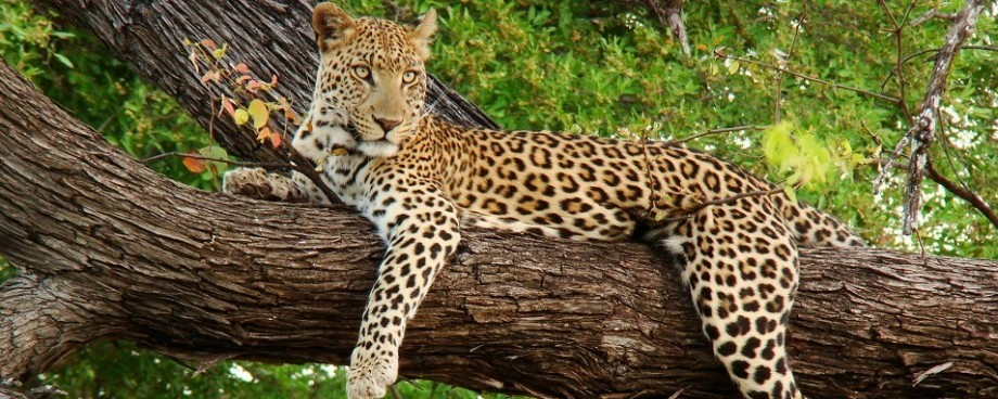 leopard How to become a travel agent from home