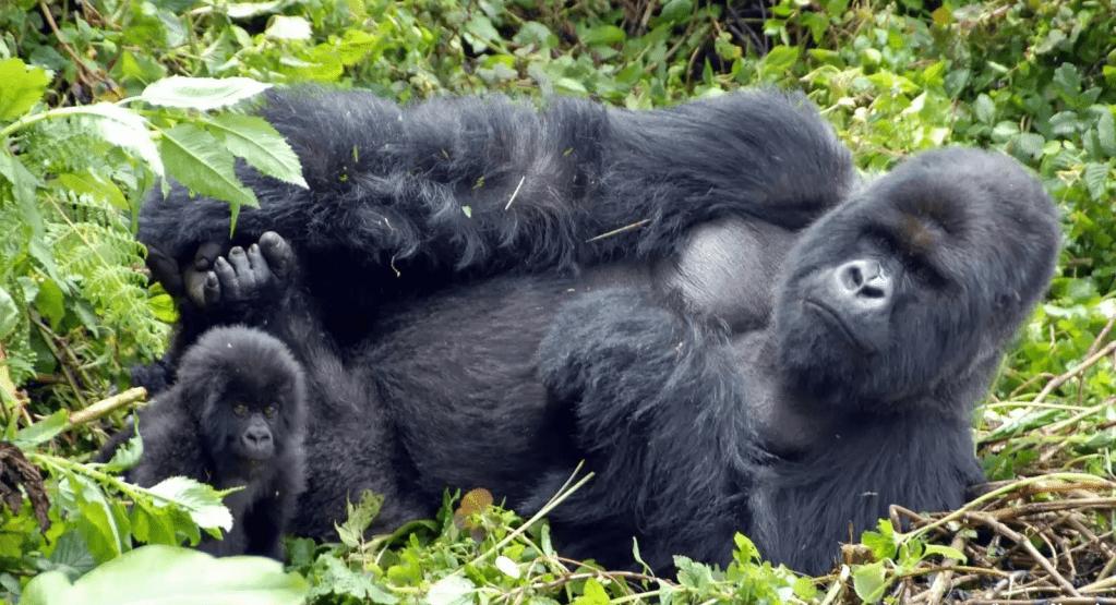 Visit Volcanoes National Park Rwanda