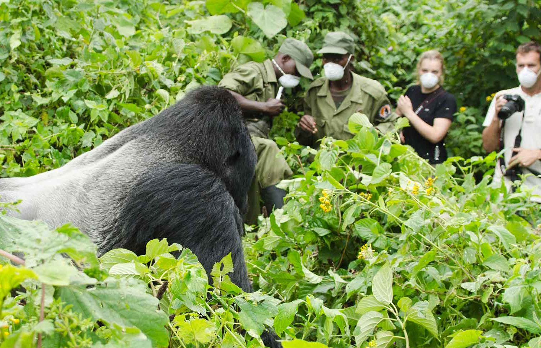 Gorilla trekking Africa Safaris Tour Big Five Travel Holiday Adventure Wildlife Nature Honeymoon tour company Vacation trip tourism nature Kubwa
