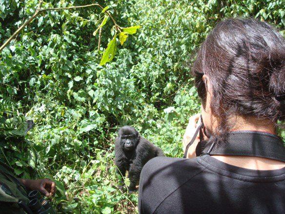 Gorilla trekking bwindi Africa Safaris Tour Big Five Travel Holiday Adventure Wildlife Nature Honeymoon tour company Vacation trip tourism nature Kubwa