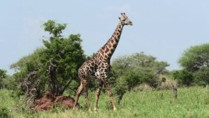Destinations Trips Africa Safaris Big Five hotel accommodation