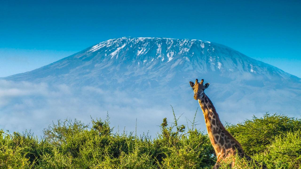 tourism Mountain Kilimanjaro Kubwa Five Safaris Travels Vacation