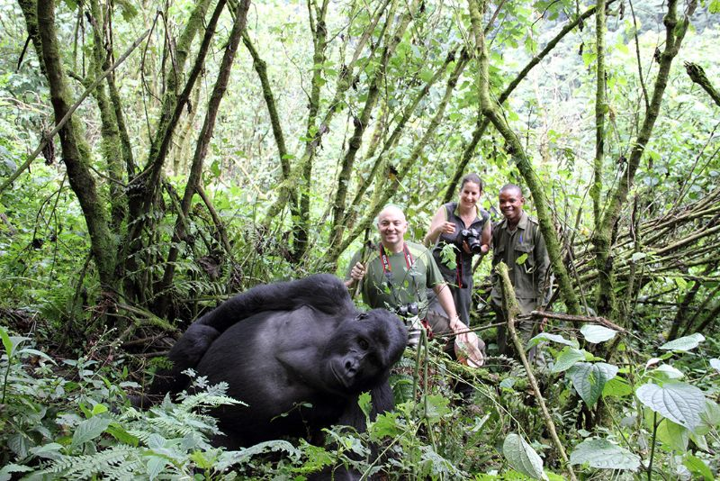 Gorilla trekking Africa Safaris Tour Big Five Travel Holiday Adventure Wildlife Nature Honeymoon tour company Vacation trip tourism nature Kubwa