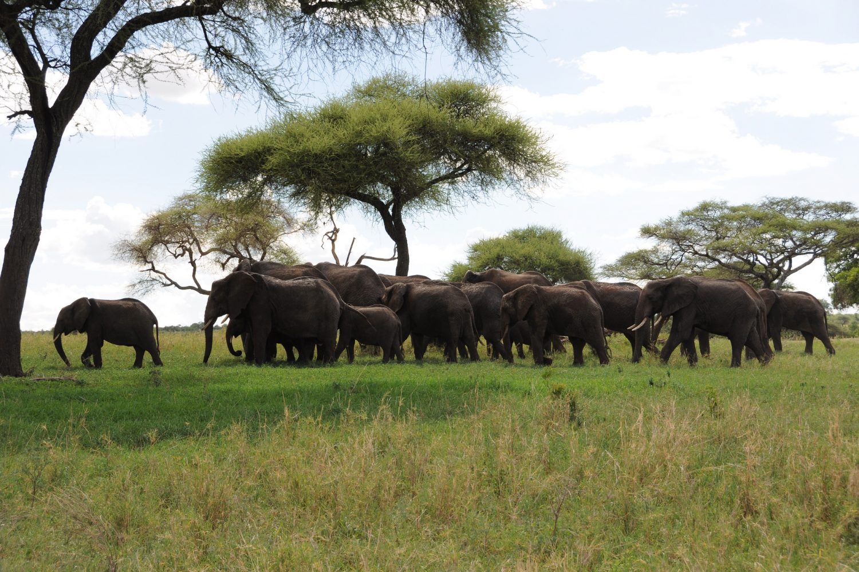 Travels tourism nature Kubwa Visit Vacation Elephants