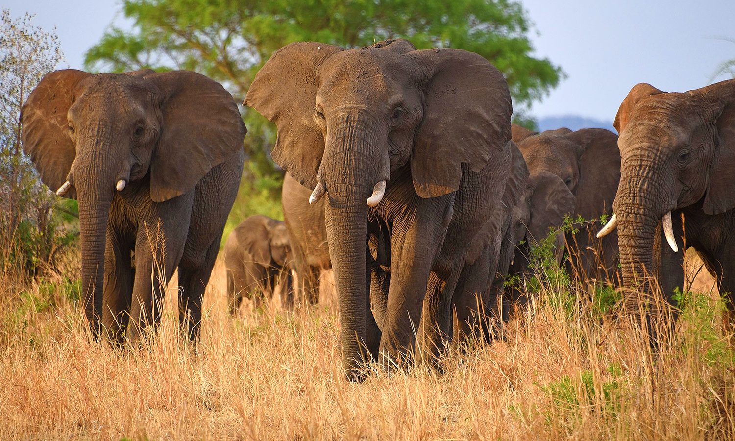 kidepo valley national park Destinations Trips Africa Big Five