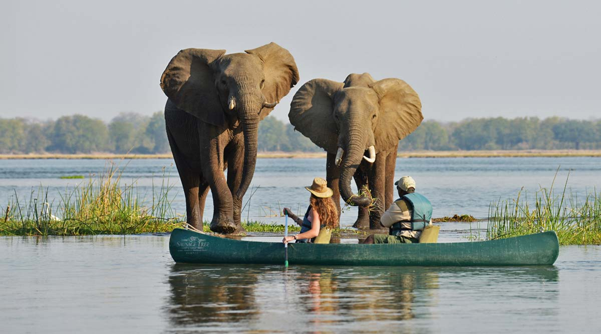 Elephants Destinations Trips Africa Big Kubwa Five Safaris travels