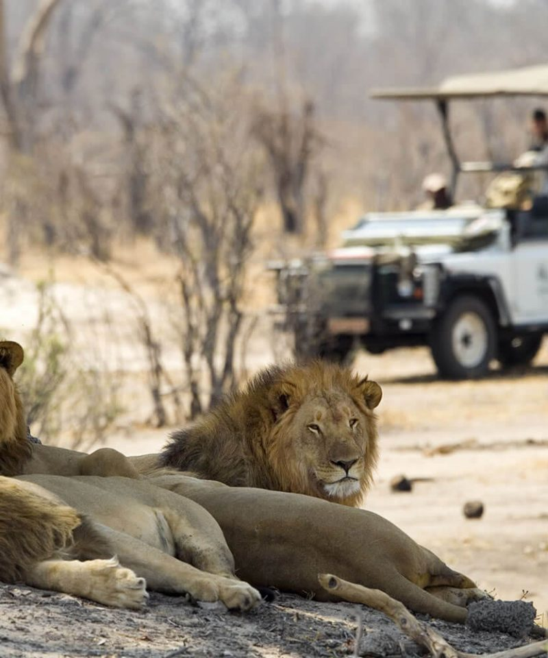 Wildlife Adventures Africa Tour Travels Holiday