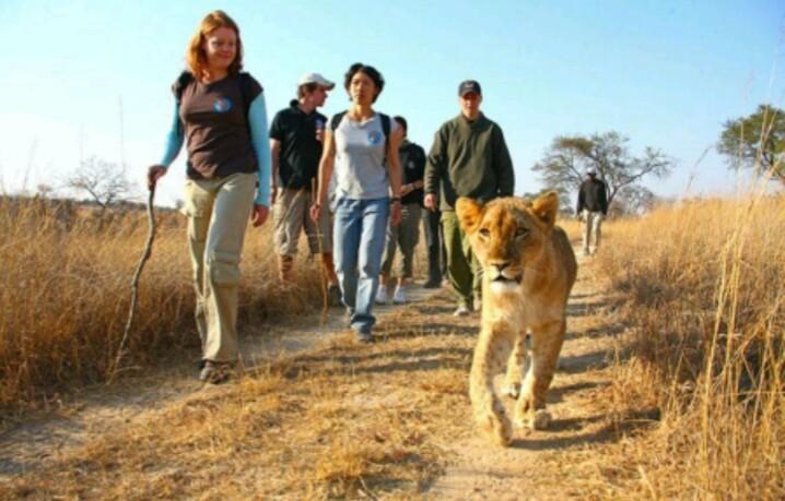 Visit tours Travels Destinations Trips Safaris Africa Big Five
