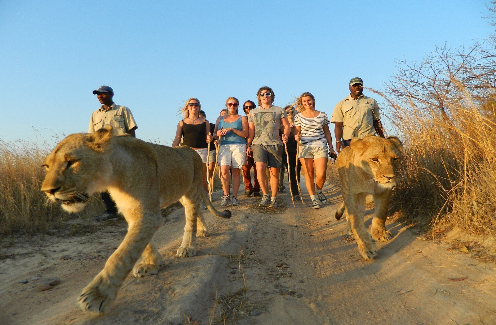 Holiday Honeymoon Adventure Wildlife Nature lions