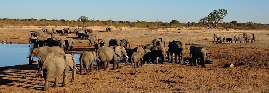 Destinations Africa Trips Safaris Big Five Elephants