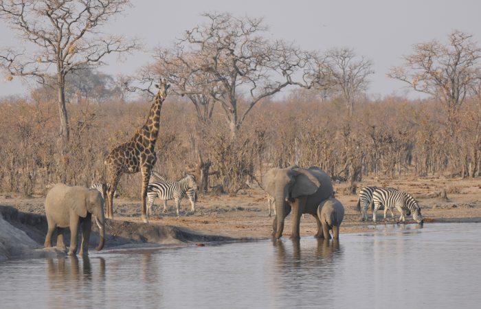 Holiday Adventure Nature Wildlife Honeymoon company giraffe
