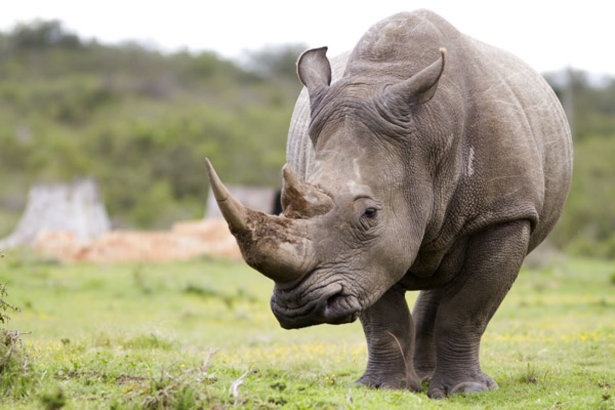 Exciting Rhino Tracking Experience tours Big Five Travel 6 Top Reasons Why You Should Visit Aberdare National Park