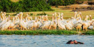 tourism nature Kubwa Travels Visit Vacation kazinga birds