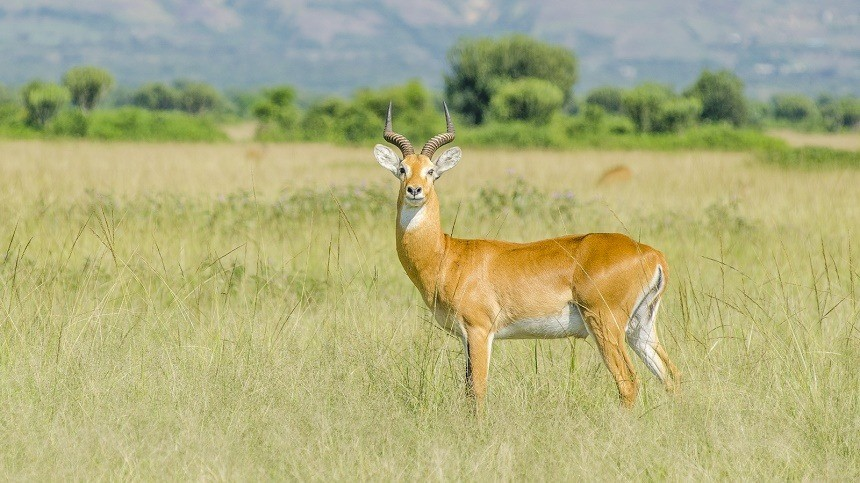 Holiday Adventure Wildlife Nature Honeymoon company impala