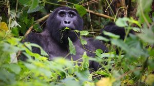 Why Uganda Is Called The Pearl Of Africa