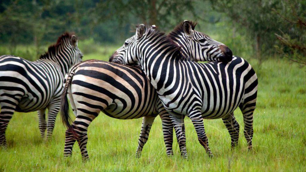 Adventure Vacation Wildlife Lake Mburo National Park-Kubwa Five Safaris