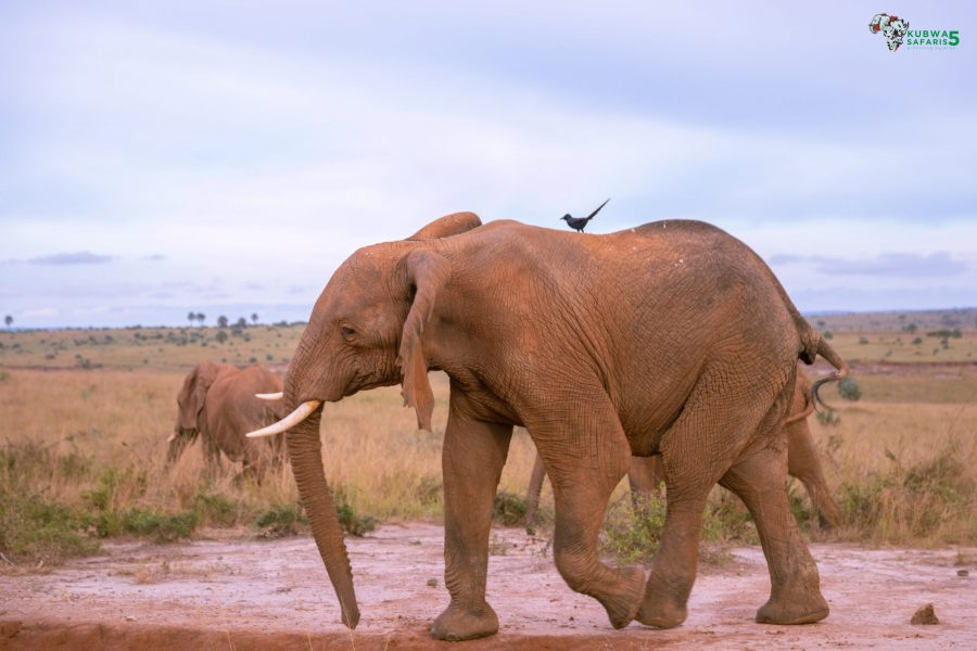 Terms And Conditions Visit Aberdare National Park In Kenya Africa
