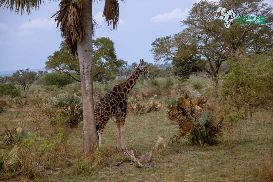 Wildlife of Africa Animals And Birds