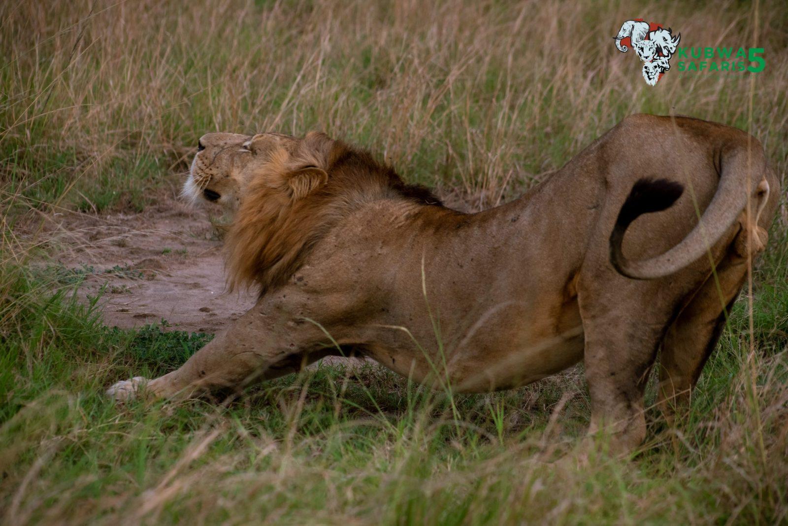 Visit Akagera National Park In Rwanda