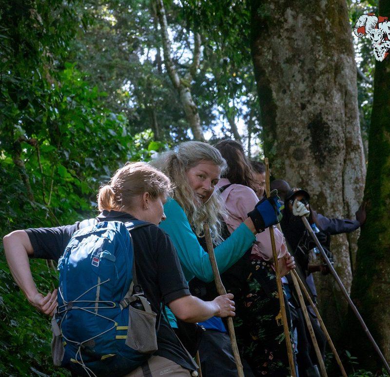 4 Days Safari of Gorilla Tracking in Bwindi Impenetrable ForestBig Five Safaris Wildlife Tour Travel Visit Destination Trips