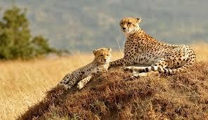 Visit Central Kalahari Game Reserve in Botswana Africa Adventure Wildlife