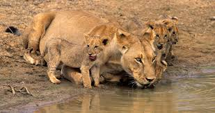 Tour And Travel Privacy Policy Visit Central Kalahari Game Reserve Botswana